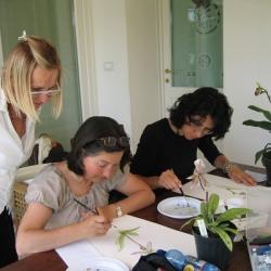 Orchids Club Italia -Treviso 2011