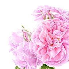Le rose dell'Agenda di Gardenia